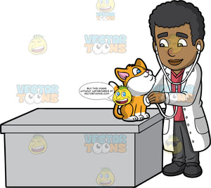 A Male Veterinary Doctor Examining A Cat. A black male veterinarian with curly hair, wearing a white coat, red shirt, dark gray pants, black shoes, smiles while standing beside a gray desk as he inspects the breathing of a cat with orange and white coat, using a white stethoscope