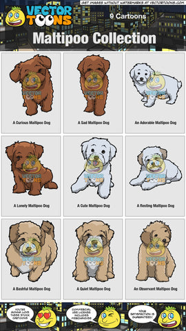 Maltipoo Collection