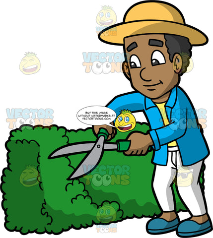 A Black Man Trimming A Bush With Clippers. A black man wearing white pants, a blue jacket over a yellow t-shirt, blue shoes, and a yellow sun hat, standing next to a green shrub and trimming it with the hedge clippers in his hands