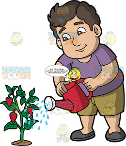 A chubby man watering a strawberry plant. A chubby man with brown hair and eyes, wearing brown shorts, a purple shirt and dark gray shoes, uses a red watering can to water a strawberry plant