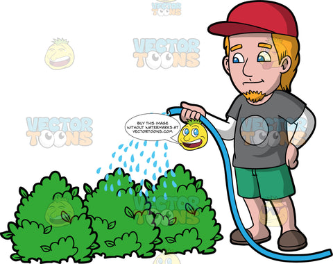 A man watering some bushes. A man with orange hair and a goatee, wearing green shorts, a gray t-shirt over a white long sleeve shirt, brown slip on shoes, and a red baseball hat, uses a hose to water some outdoor bushes