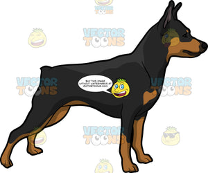 An Alerted Pinscher Dog