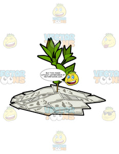 Dollar Money Plant