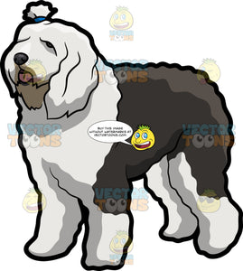 A Cute Chubby Old English Sheepdog