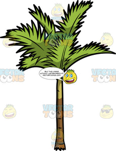 A Slim Palm Tree