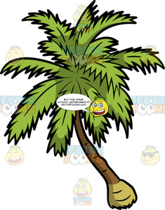 A Beach Palm Tree