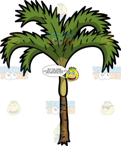 A Decorative Palm Tree