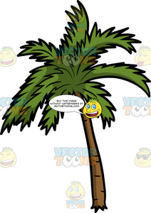 A Beautiful Palm Tree