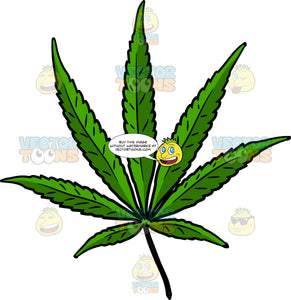 A Thin Cannabis Leaf