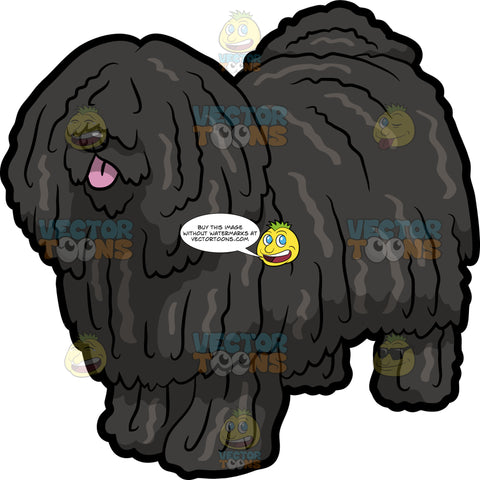 A Well Groomed Puli Dog