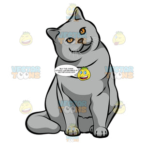 A British Shorthair Cat