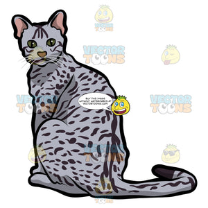 An Egyptian Mau Cat