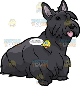 A Cute Scottish Terrier Dog