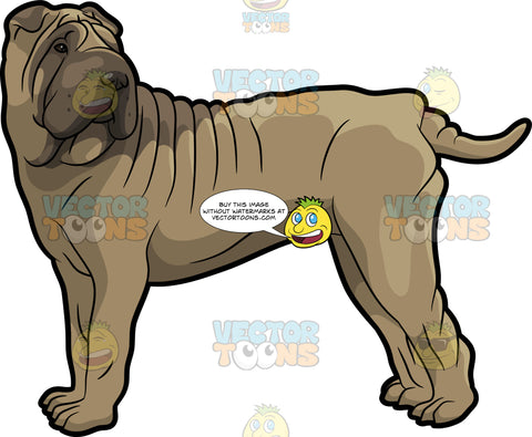 A Big Shar Pei Dog
