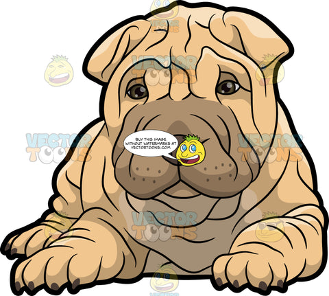 A Cute Looking Shar Pei Puppy