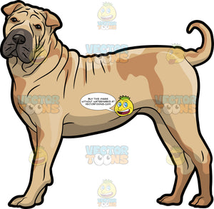 A Tall Shar Pei Dog
