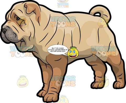 A Shar Pei Pet Dog