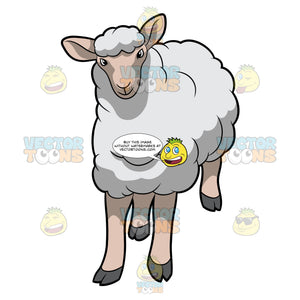 A Young Sheep