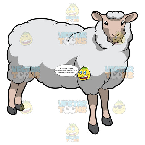 A Friendly Looking Sheep
