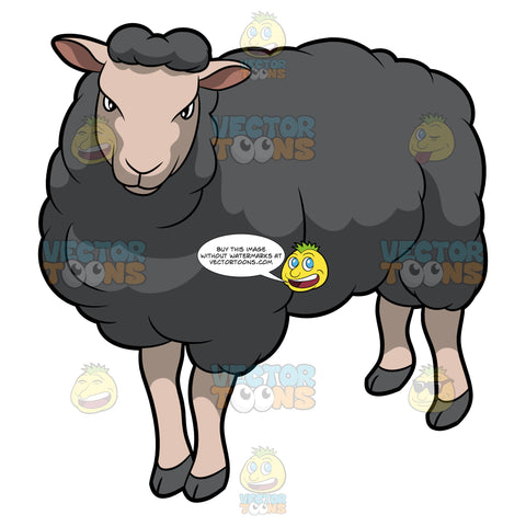 A Fierce Looking Black Sheep