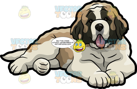 A Cute St Bernard Dog