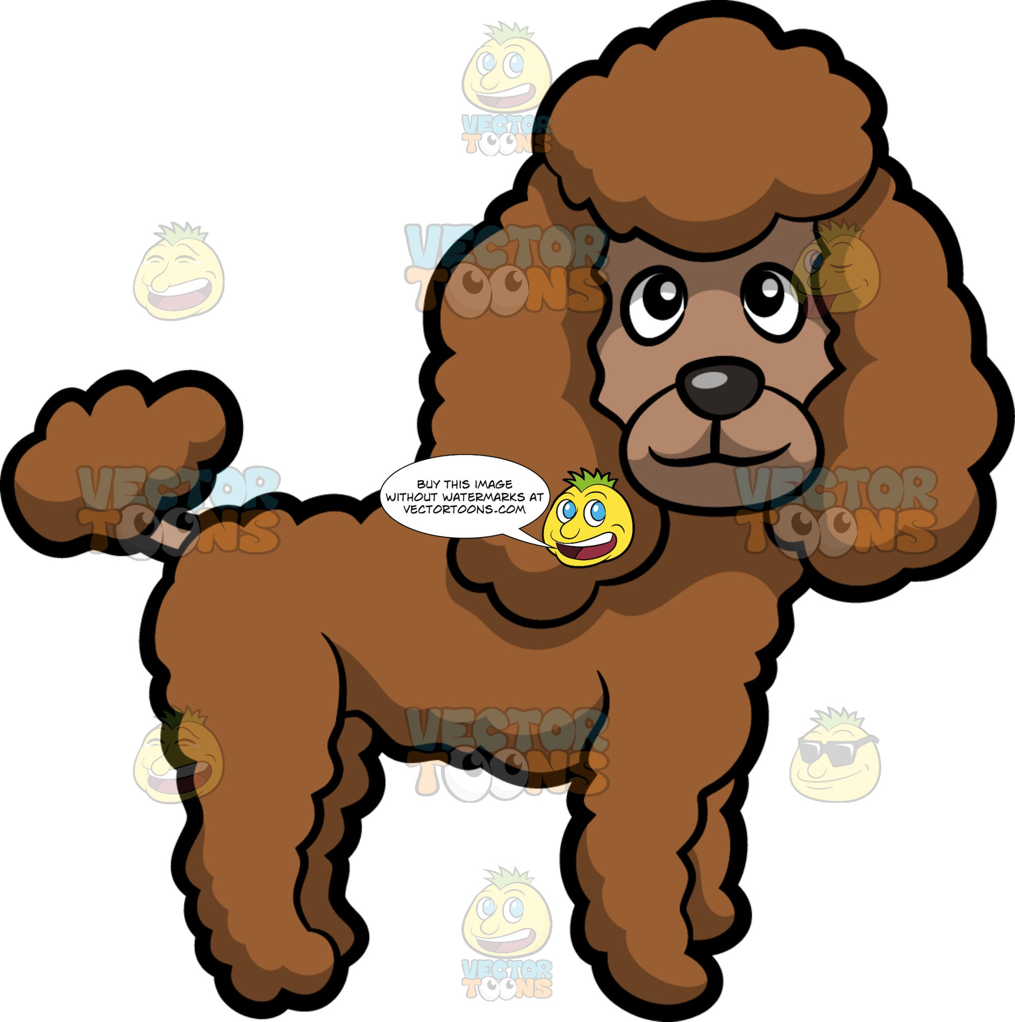 A Cute Poodle Standing And Looking To The Side