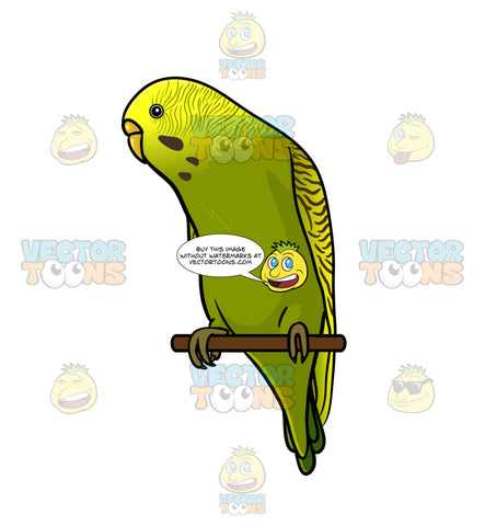 Green And Yellow Budgie Perched On A Stick