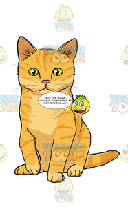 Orange Kitten With Yellow Eyes Sitting And Looking Straight Ahead