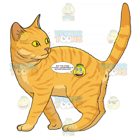 Orange Kitten With Yellow Eyes Standing With Its Tail Up Looking Back