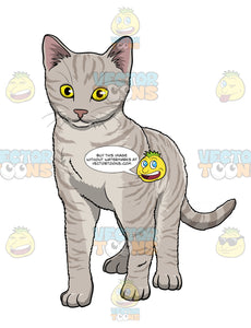 Grey Kitten With Yellow Eyes Standing And Looking Ahead