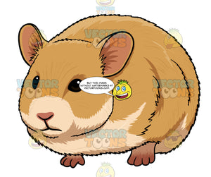 Cute Brown Hamster
