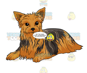 Brown Yorkshire Terrier Laying Down And Looking Straight Ahead
