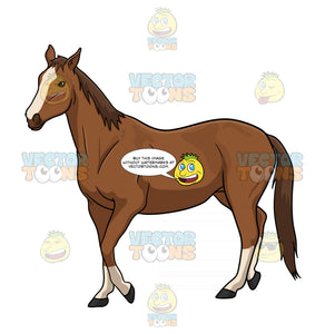 Brown Horse With White Stripe Down The Centre Of Its Face