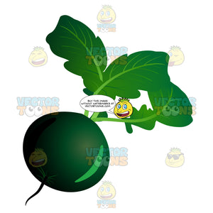 Green Bulbous Vegetable
