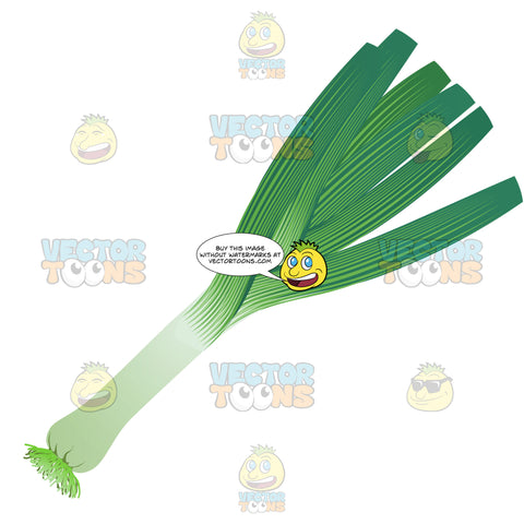 Green Onion With Leaves Intact