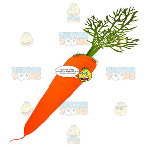 Carrot With Leafy Stem