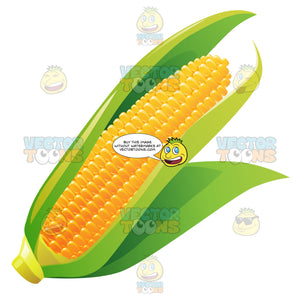 Corn On The Cob With Leaves In Place
