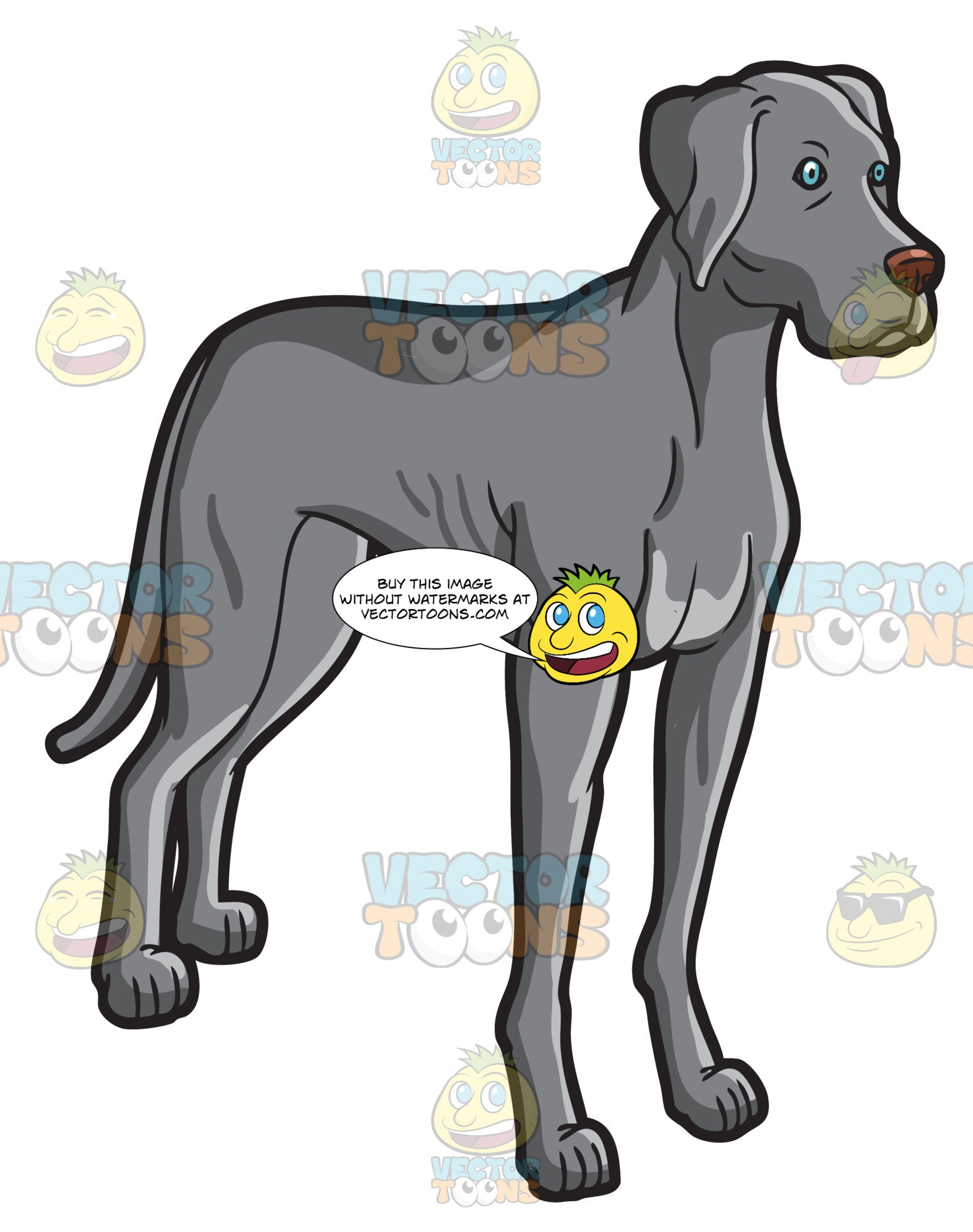 A Tall Adult Weimaraner Dog