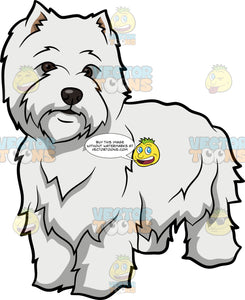 An Observant West Highland White Terrier
