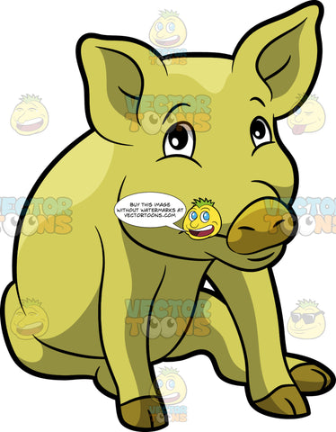 A Shy Yellow Pig