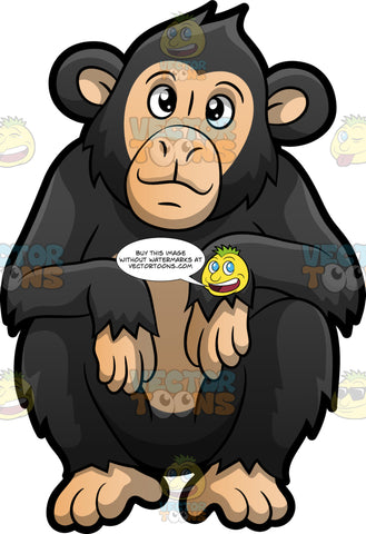 A Cute Chimpanzee