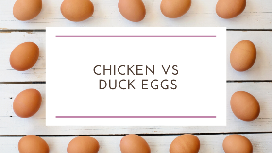 Chicken Eggs vs Duck Eggs : What the Cluck is the Difference?