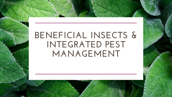 Beneficial Insects and Integrated Pest Management