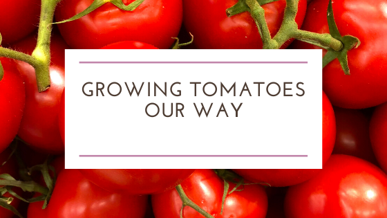 Growing Tomatoes Our Way