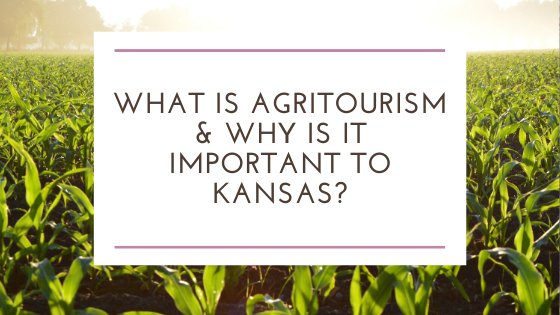 What is Agritourism & Why is it Important to Kansas?