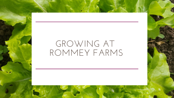 Growing in the Winter at Rommey Farms