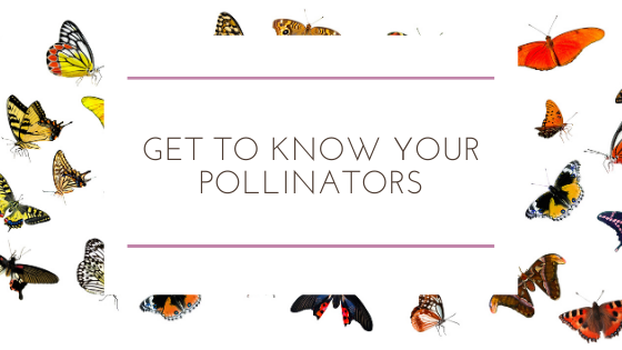 Get To Know Your Pollinators