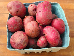 Red Norland New Potatoes