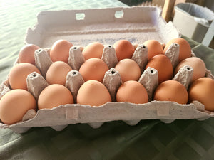 Chicken Eggs 18 Count
