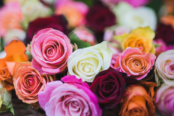 Rose Symbolism, Colours and Meanings